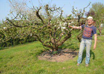 Klaus Schuh freut sich über erste Blüten an dem 15-Sorten-Apfelbaum