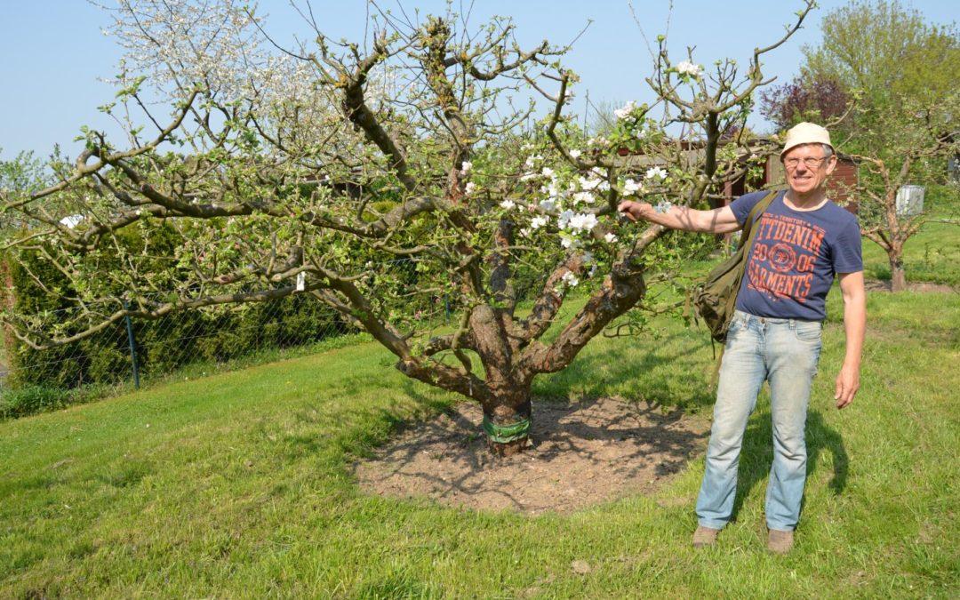 Ohne Veredlung funktioniert der Obstbau nicht – kopulieren, aus zwei mach eins
