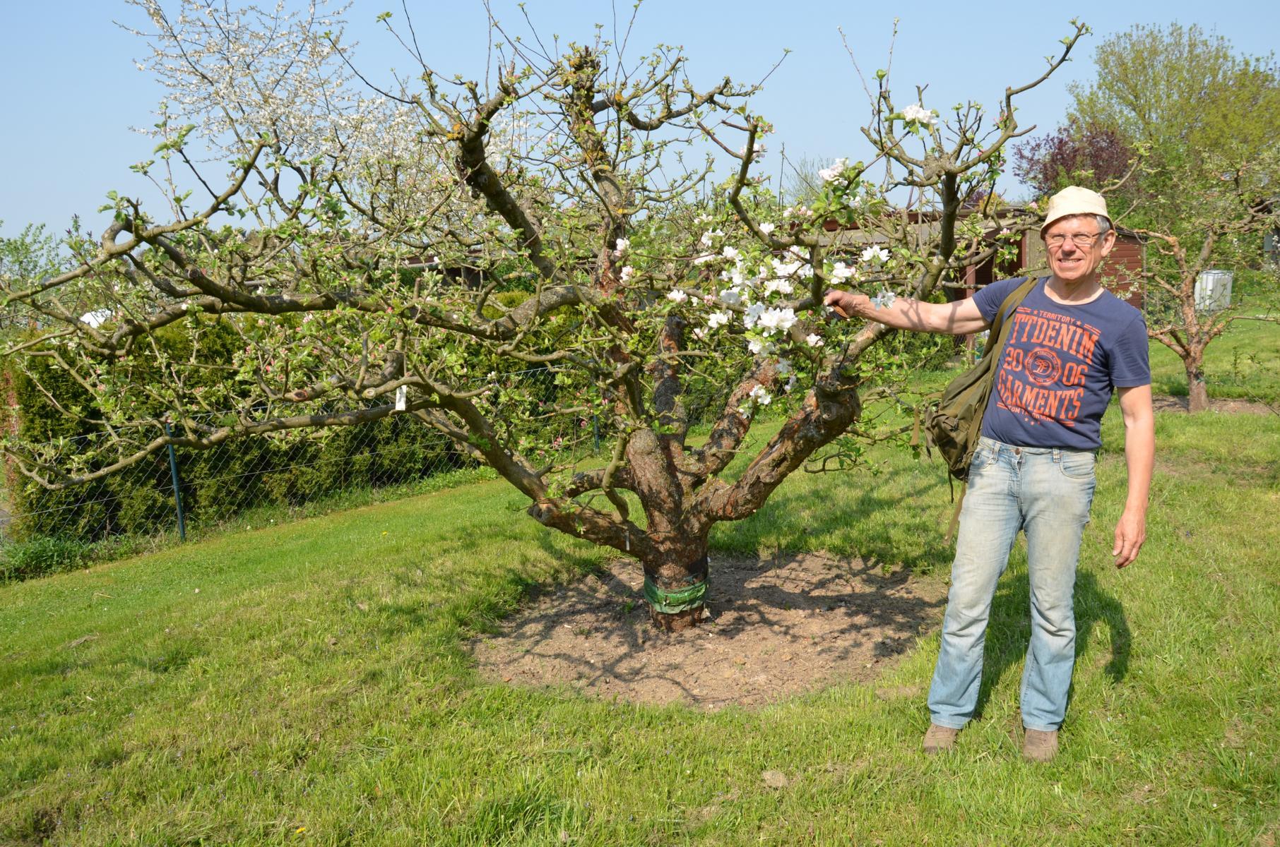 Ohne Veredlung funktioniert der Obstbau nicht